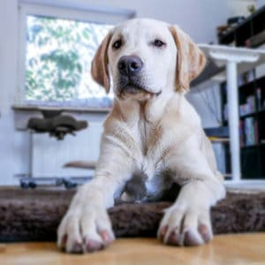 Keep your pet calm during kitchen remodeling